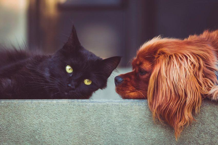 Cómo mantener tus mascotas frescas en verano