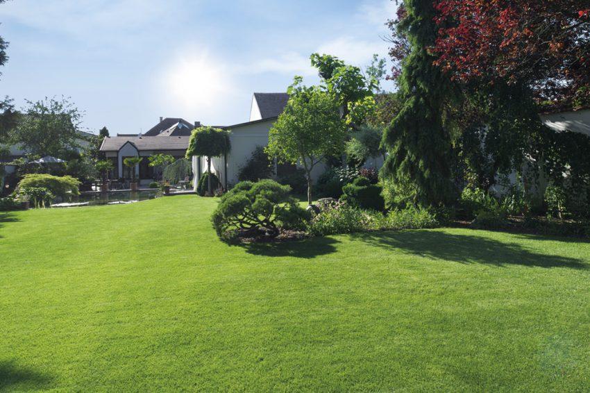 Eco consejos para ahorrar agua en tu jardín