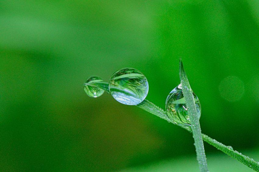 Deja que tu jardín respire, es tiempo de escarificar