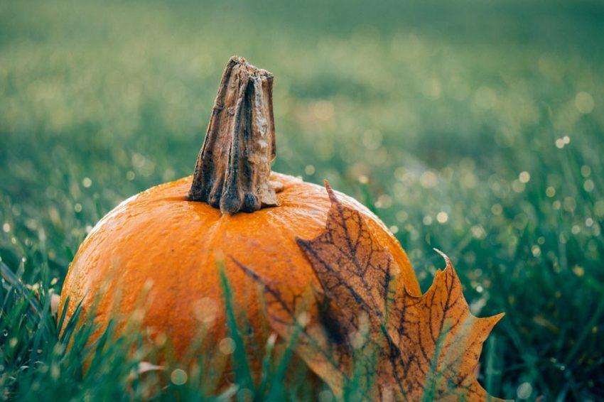Prepara tu jardín en septiembre para el otoño