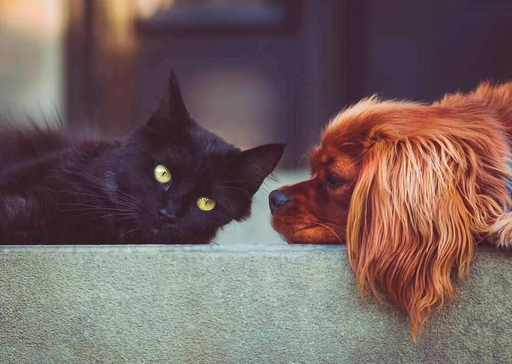 mascotas-perro-gato-comida
