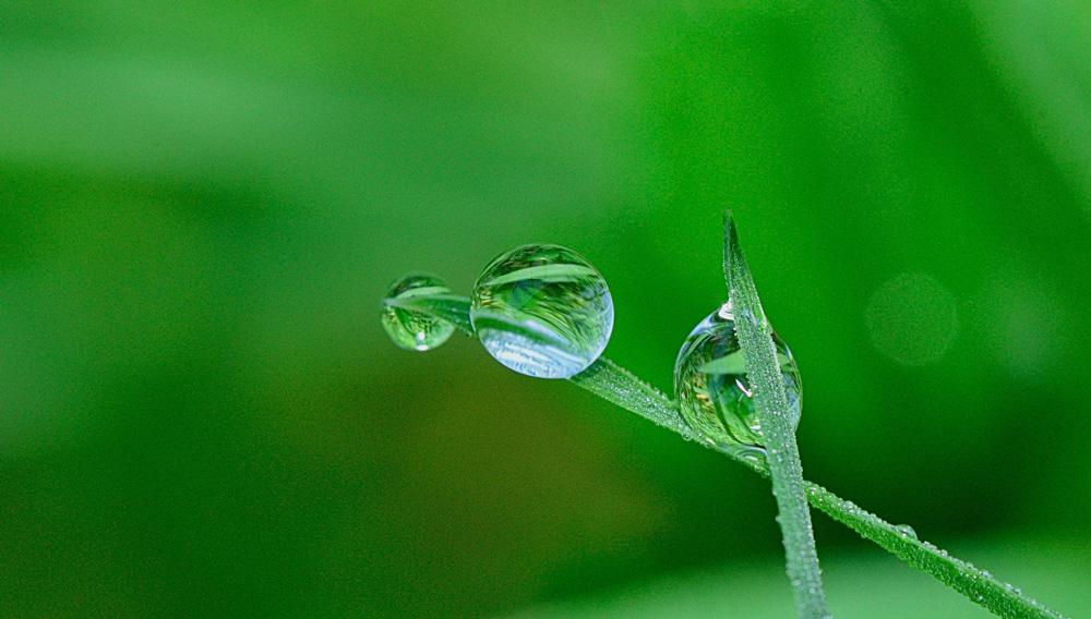 jardín-agua-riego