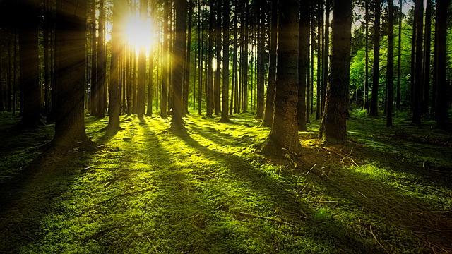 árbol-calor-verano-césped-grandes extensiones