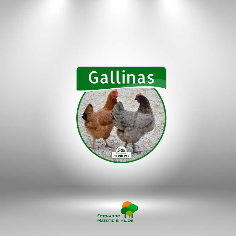 gallinas-pienso-granja-alimentos-animales-matute-e-hijos