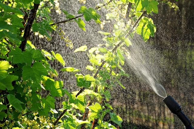 pulverización-riego-hojas-césped-jardín